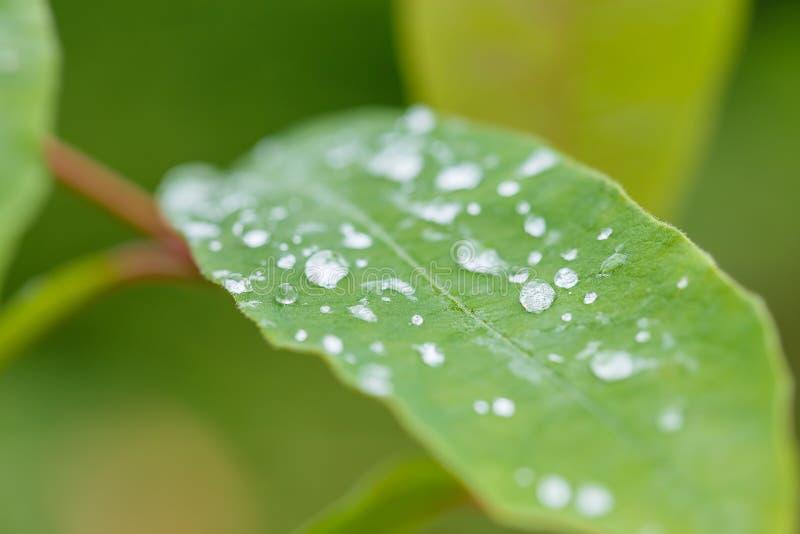 зеленый цвет падений выходит дождь стоковая фотография