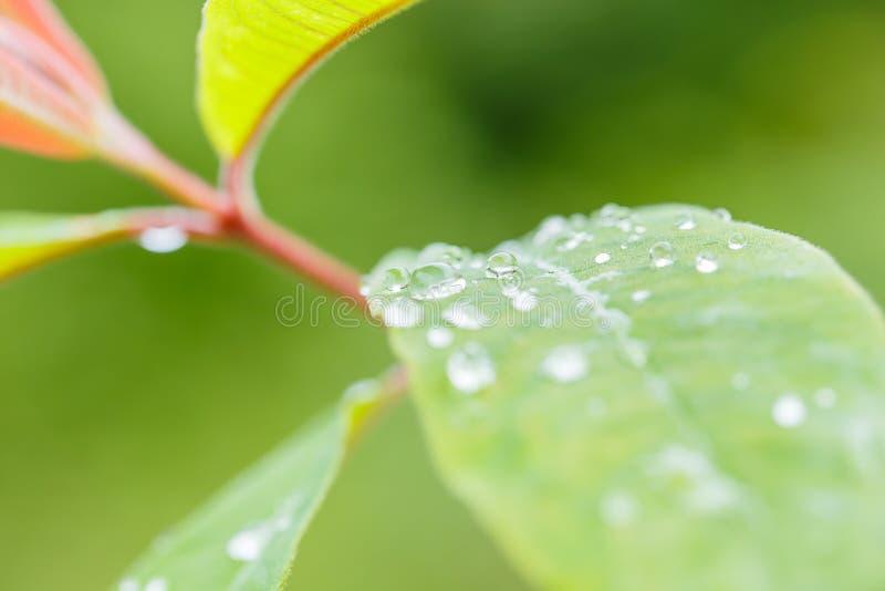 зеленый цвет падений выходит дождь стоковая фотография rf