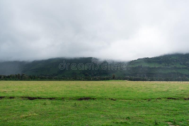 Зеленый цвет под туманом стоковые фотографии rf