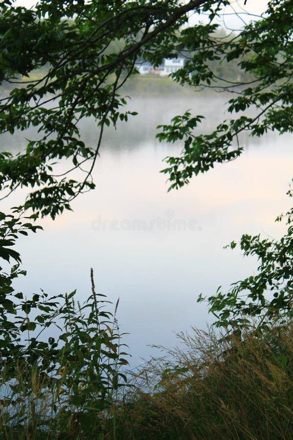 зеленый цвет рамки листва предпосылки росный выходит белизна стоковая фотография