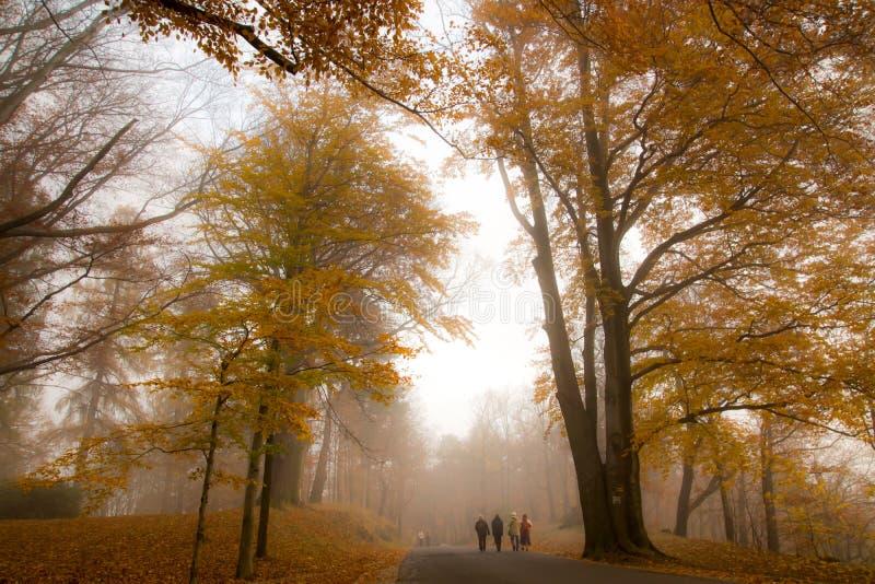 зеленый цвет травы осени даже выходит померанцовая тихая погода взгляда стоковое изображение rf