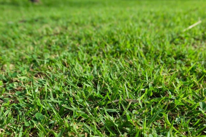 зеленый цвет травы luscious стоковое фото rf