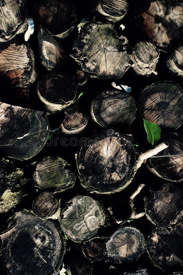 Зеленый цвет шерстей стоковое фото