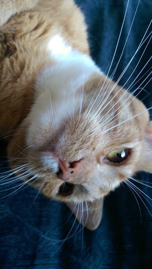 зеленый цвет eyed котом стоковые фотографии rf