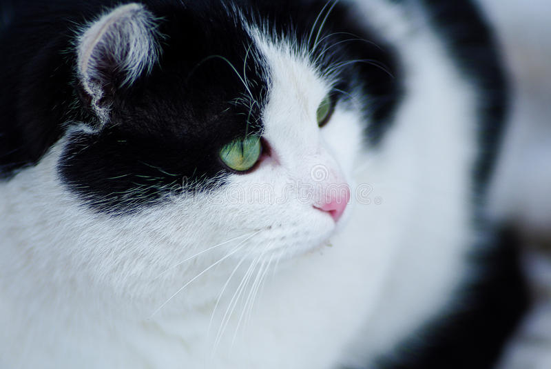 зеленый цвет eyed котом стоковое фото