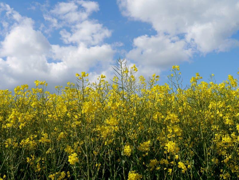 Зеленый цвет fields лес Германия заводов природы солнца лета стоковые изображения rf