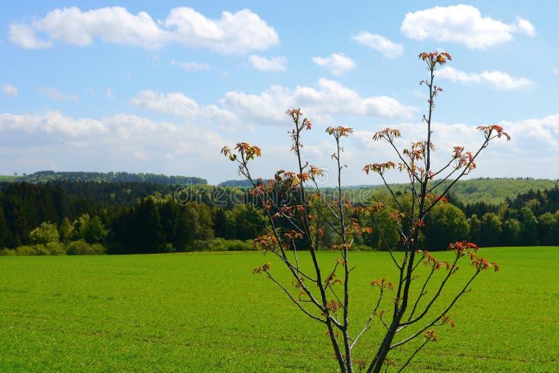Зеленый цвет fields лес Германия заводов природы солнца лета стоковая фотография