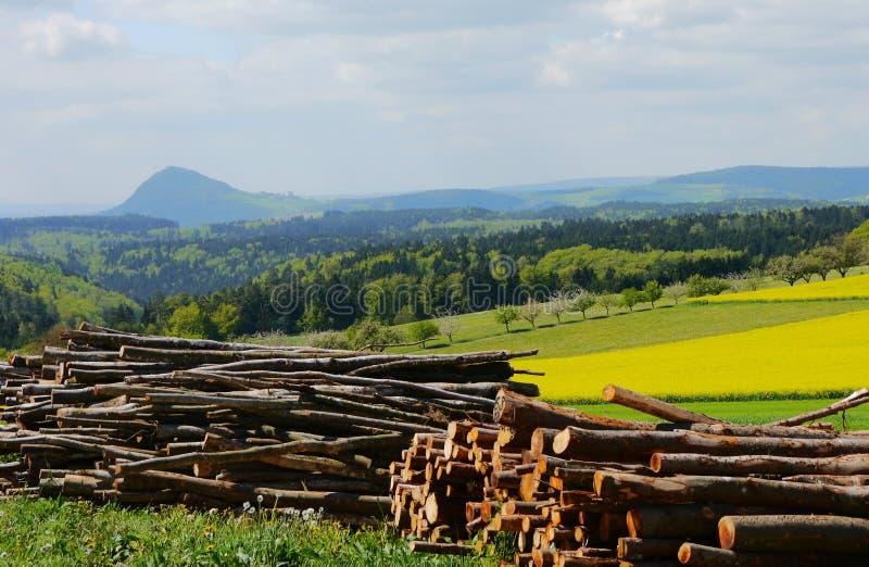 Зеленый цвет fields лес Германия заводов природы солнца лета стоковое фото rf