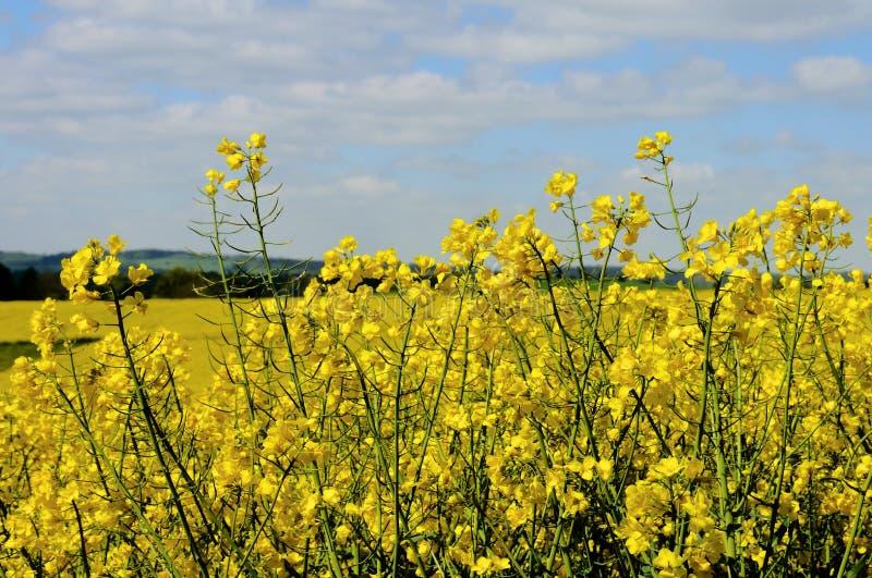 Зеленый цвет fields лес Германия заводов природы солнца лета стоковые фото