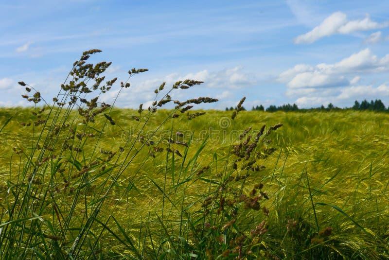 Зеленый цвет fields лес Германия заводов природы солнца лета стоковое фото