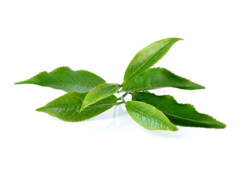 зеленый чай листьев стоковые изображения