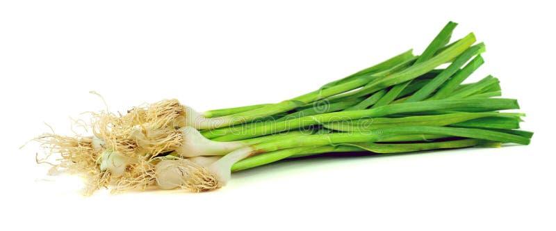Зеленый чеснок изолированный на белой предпосылке урожай стоковые изображения