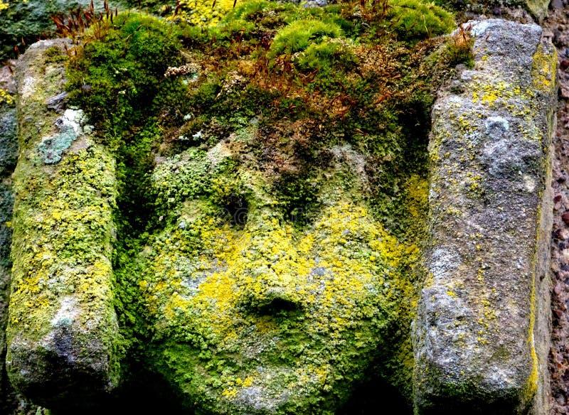 зеленый человек стоковое изображение rf