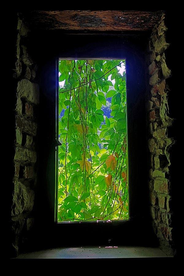 Download Зеленый стоковое фото. изображение насчитывающей спрятано - 81801588