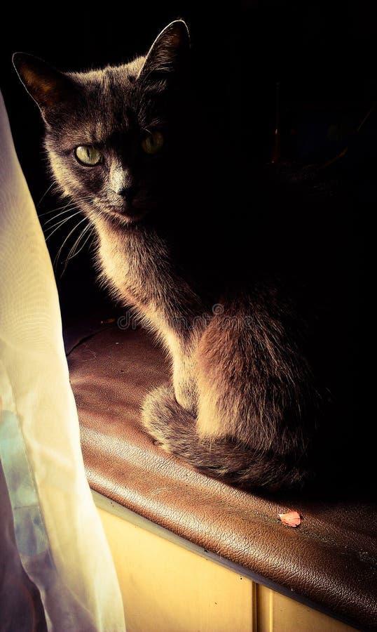 Зелен-eyed кот стоковое изображение
