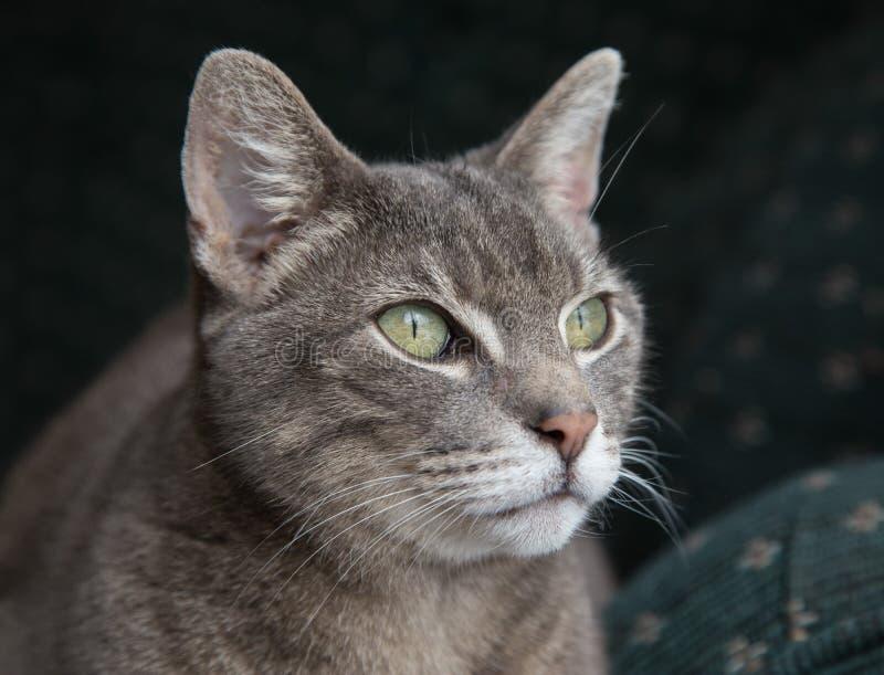 Зелен-eyed кот стоковое изображение rf