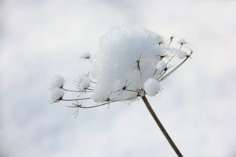 Download зима белизны снежинок предпосылки голубая Стоковое Фото - изображение насчитывающей сух, трава: 81810978