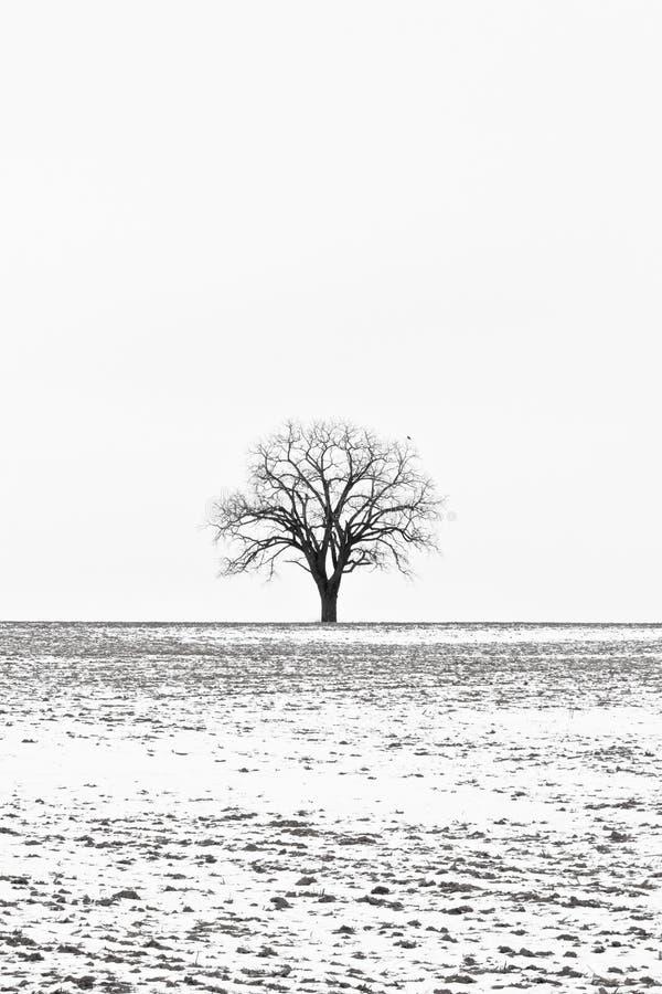 зима вала стоковые фото