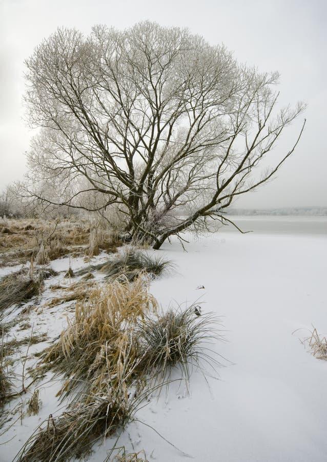 зима валов озера впечатлений собрания стоковые фотографии rf