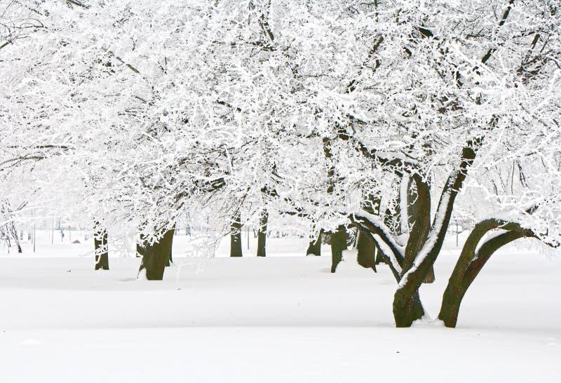 зима валов стоковое фото rf