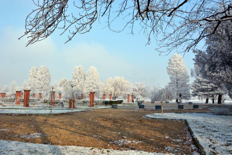 зима валов парка природы в январе заморозка дня снежная стоковые изображения