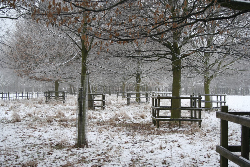 зима Великобритании снежка места nottinghamshire стоковое изображение rf