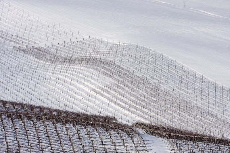 зима виноградников oltrepo Италии pavese стоковые изображения rf