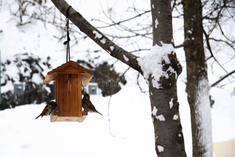 зима воробья дома еды стоковые фото