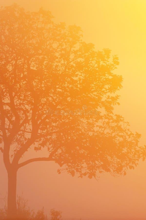 Зима восходом солнца, красивым золотым солнечным лучом светя на дереве и тропическими полями, формой искусства ветвей дерева Phuk стоковые изображения rf