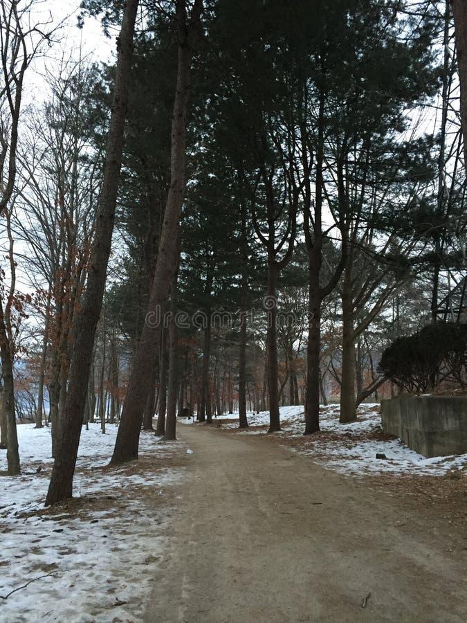 Зима во время дня стоковое фото rf