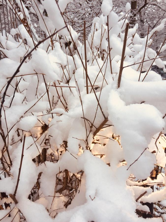 зима времени снежка цветка стоковые фотографии rf