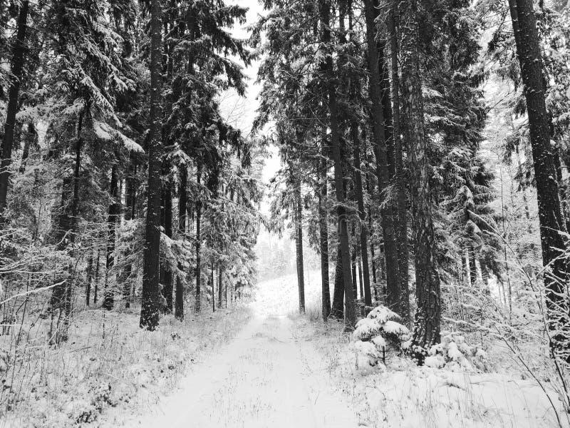 зима времени снежка цветка стоковое изображение