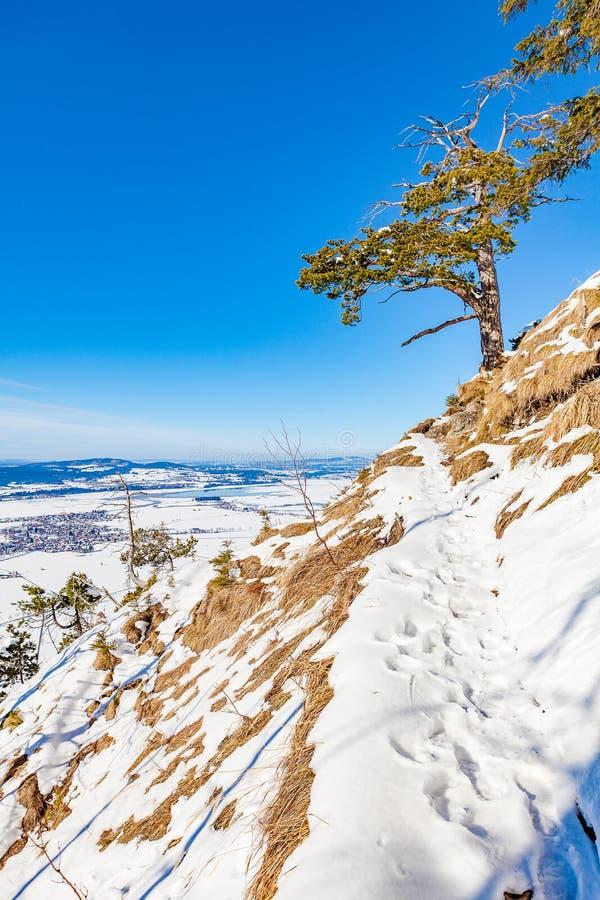 зима времени снежка цветка стоковое фото