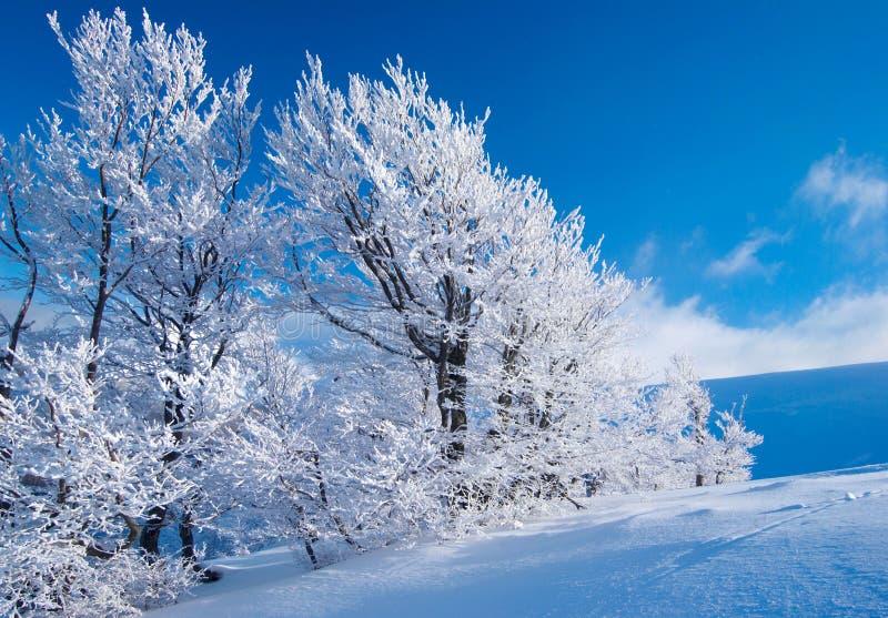 Зима в горах стоковое изображение