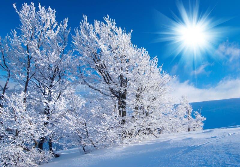 Зима в горах стоковые изображения