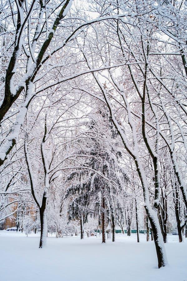 Зима в деревьях парка в снеге стоковые изображения rf