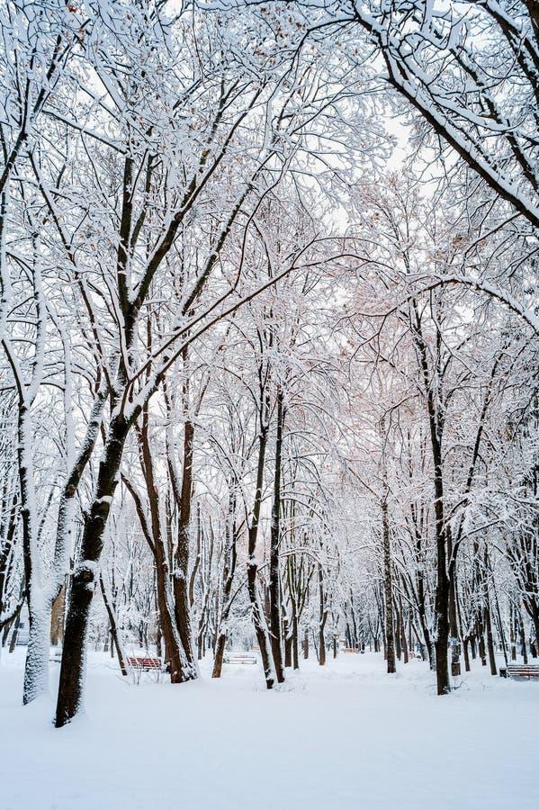Зима в деревьях парка в снеге стоковое фото rf