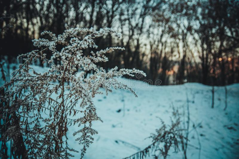 Зима в древесине стоковое фото