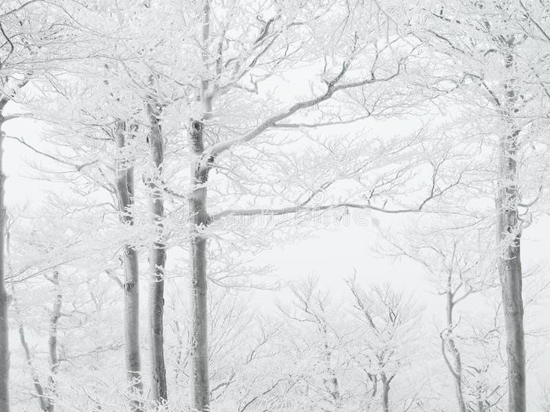 Зима в лесе бука стоковое изображение