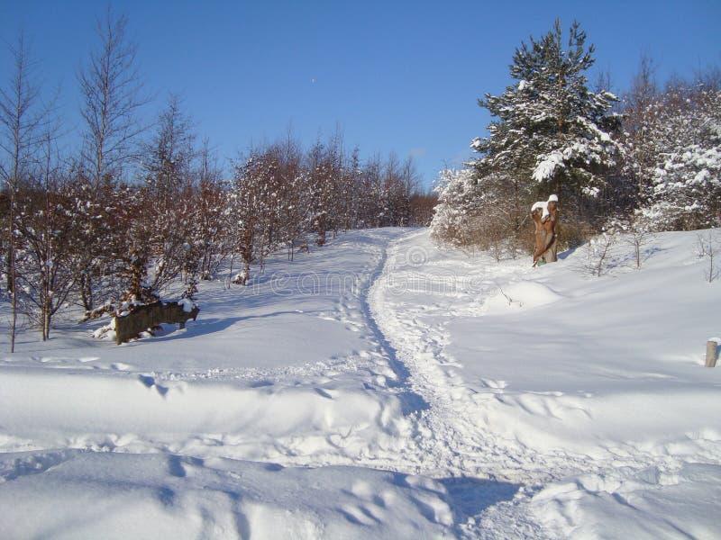 Зима в Ольборге в Дании стоковое фото rf