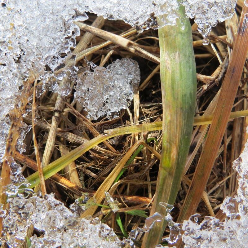 Зима в пуще стоковая фотография