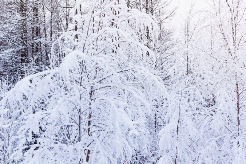 Зима в пуще стоковое изображение