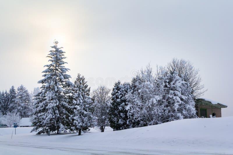 Зима в пуще стоковые фото