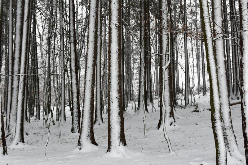 Зима в древесинах стоковые фото