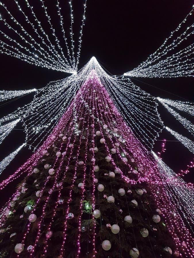 Зима в рождественской елке Вильнюса Литвы с пуком светов стоковое фото rf