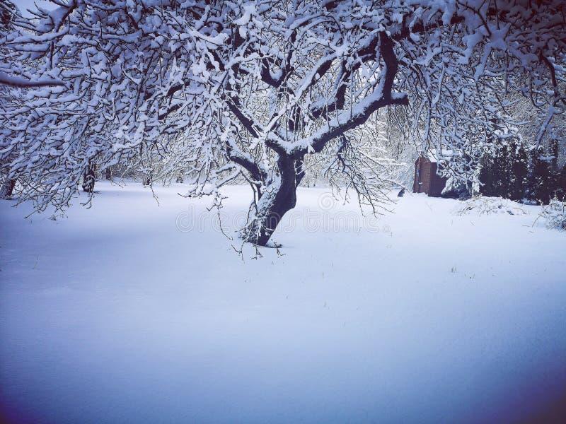 Зима в старом саде стоковая фотография