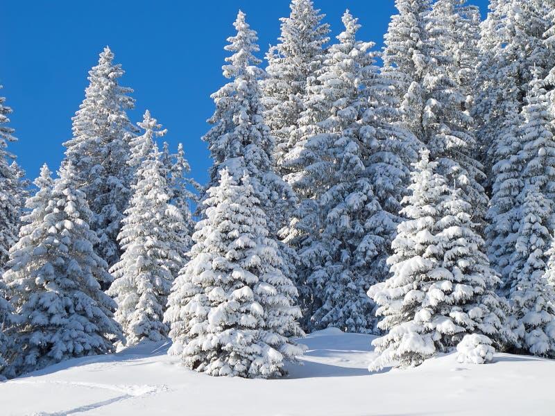 Зима в alps стоковое изображение