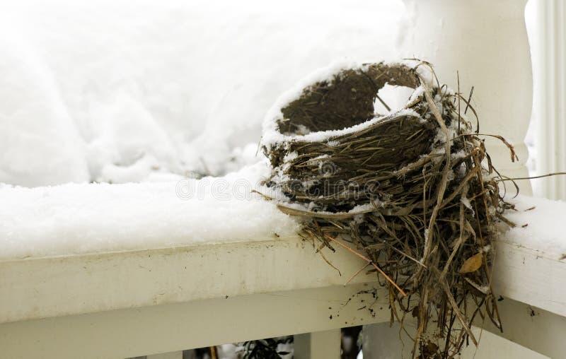 зима гнездя стоковые изображения rf