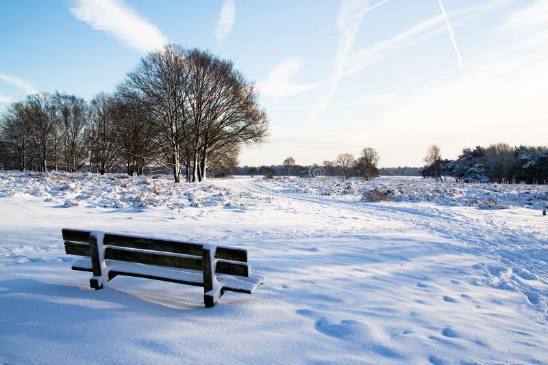 зима Голландии стоковые изображения rf