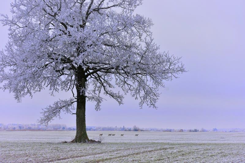 зима дня туманная вал поля сиротливый стоковое фото